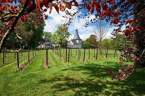vignes Château de Bioul